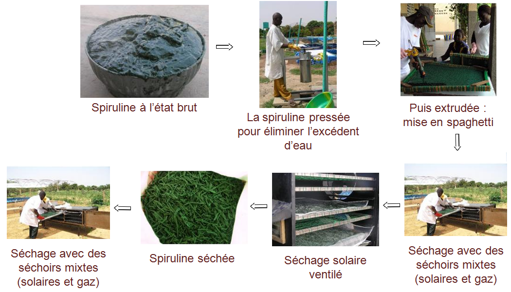 Cycle de production de la spiruline